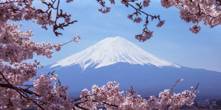 Cherry Blossoms rencontres Asie connexion datant camé